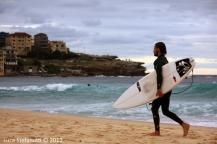 Bondi's surfers